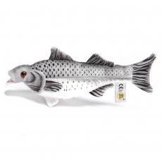 Seebarsch 25cm