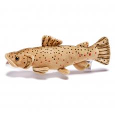 Brown Trout 25cm