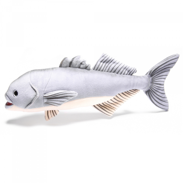 Bluefish 43cm