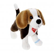 Beagle 25cm, standing